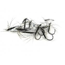 Black Spider Wet