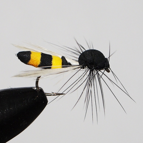 Foam Winged Wasp