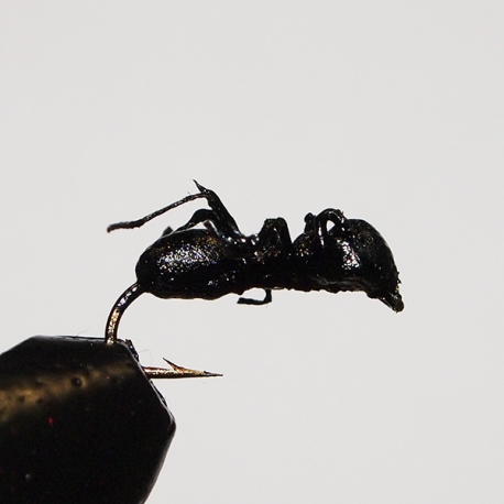Black Foam Ant