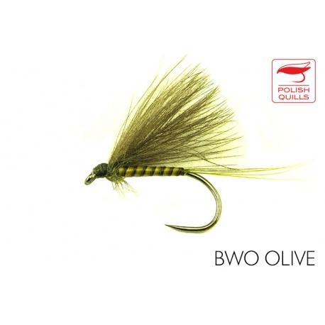 BWO Olive