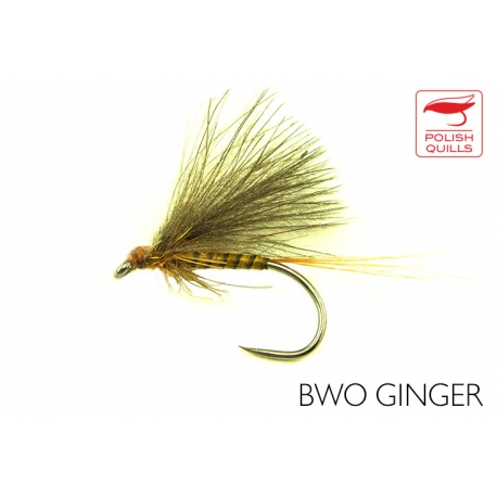 BWO Ginger