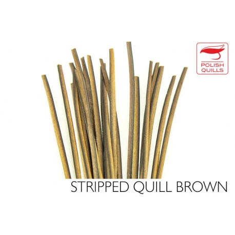 Polishquills Stripped Quill Brown