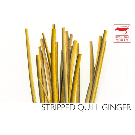 Polishquills Stripped Quill Ginger