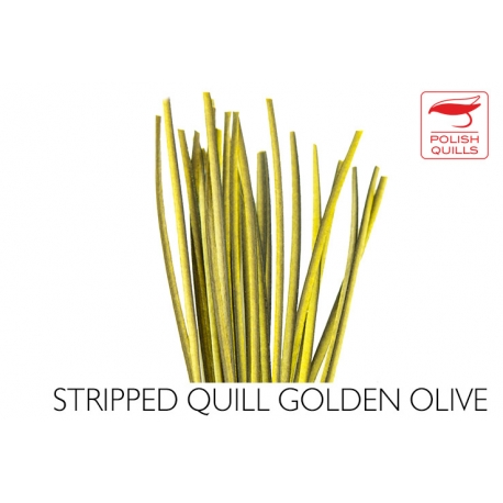 Polishquills Stripped Quill Golden Olive