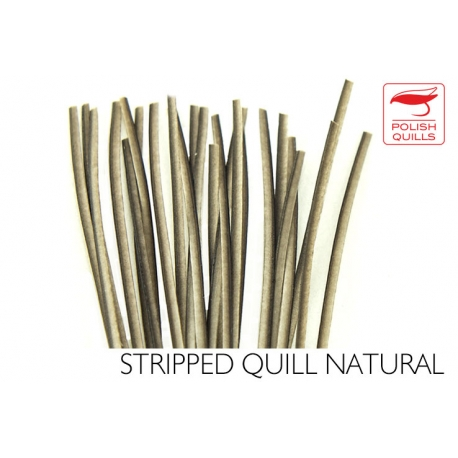 Polishquills Stripped Quill Natural