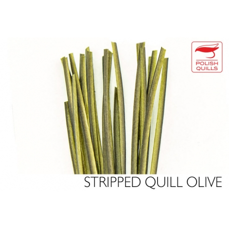 Polishquills Stripped Quill Olive