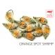 Shrimp Sparky Orange