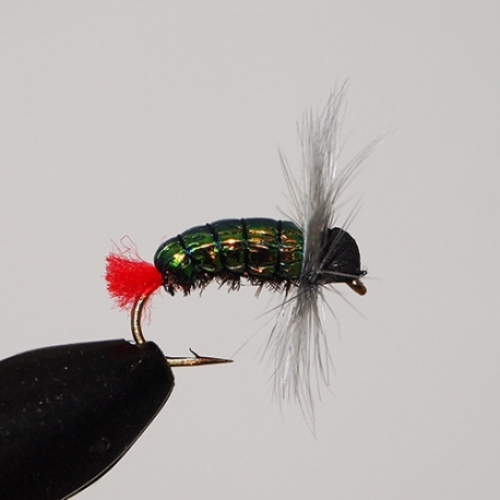 Green Back Fly